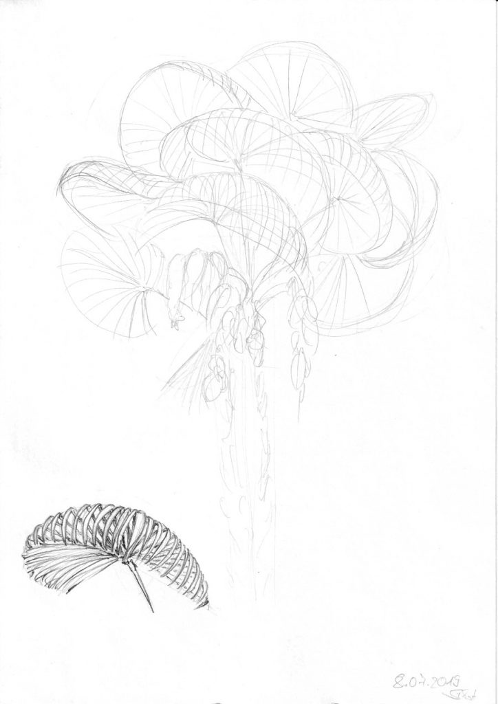 Studie Palmblatt